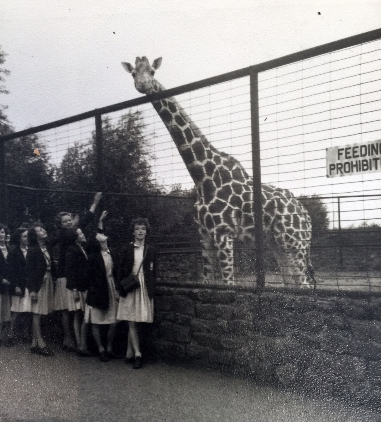 Upper IIIrds visit to Chester Zoo, July 1959